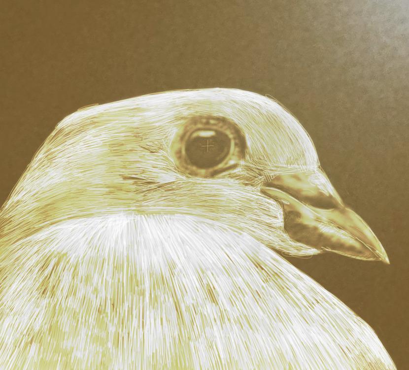 holubice-zlata.jpg